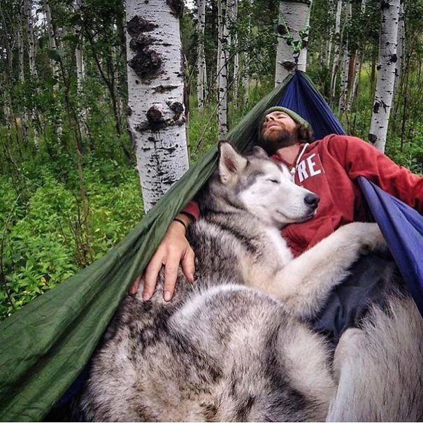 acampar-con-perros-ryan-carter (6)