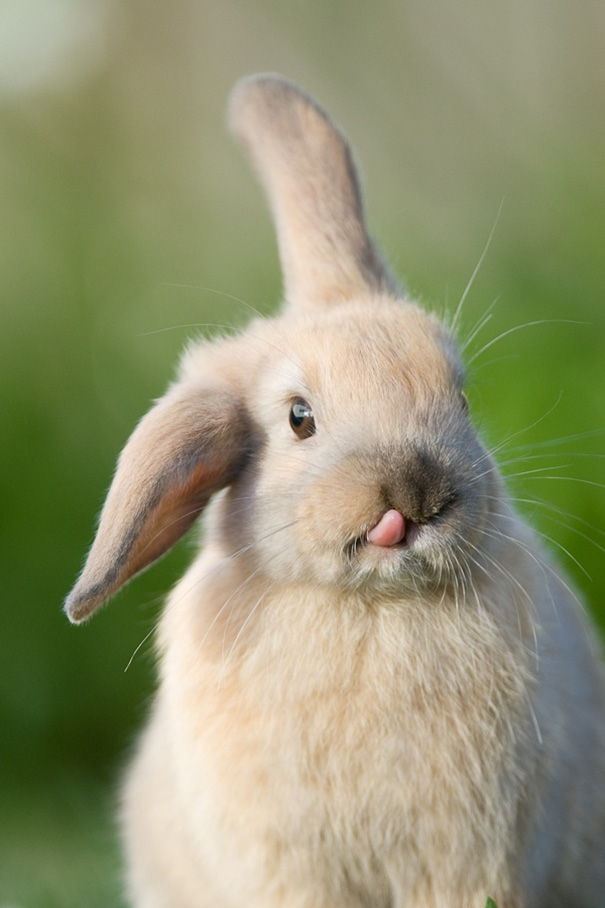 dia-internacional-conejos (7)