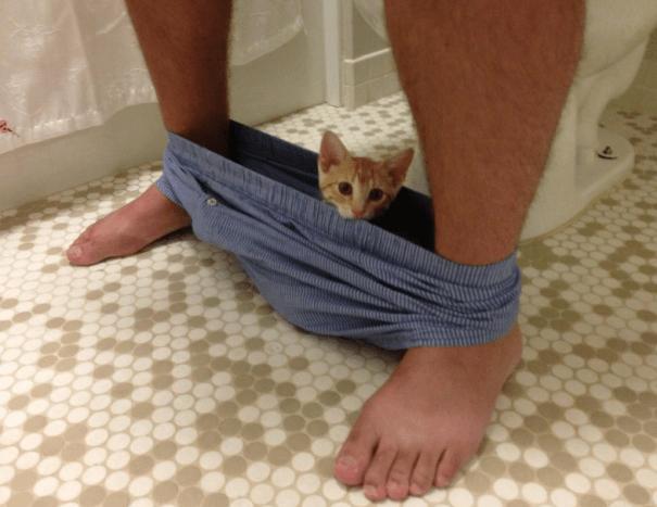 gatos-ajenos-espacio-personal (1)