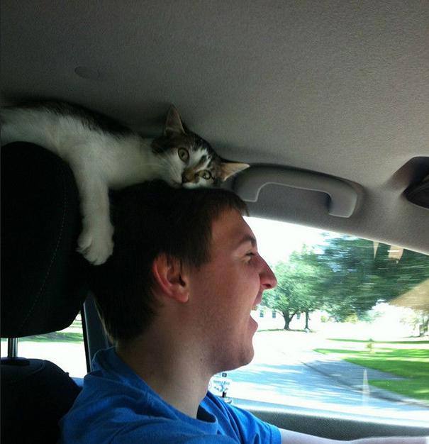 gatos-ajenos-espacio-personal (2)