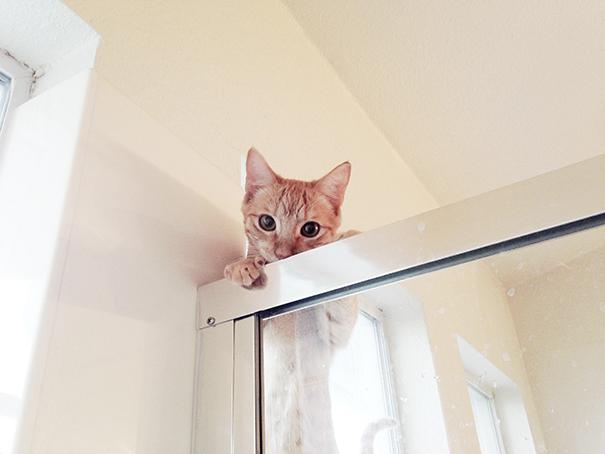 gatos-ajenos-espacio-personal (4)