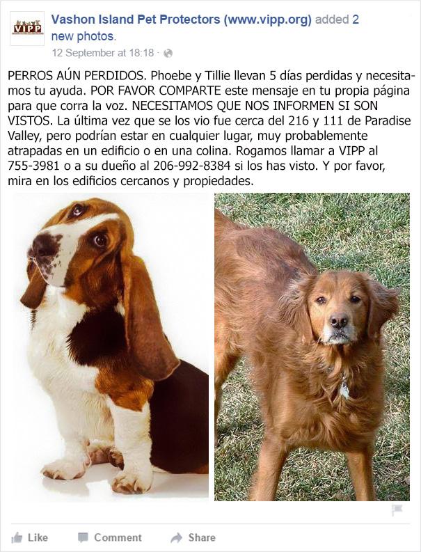 perro-monta-guardia-companera-atrapada-ayuda (3)