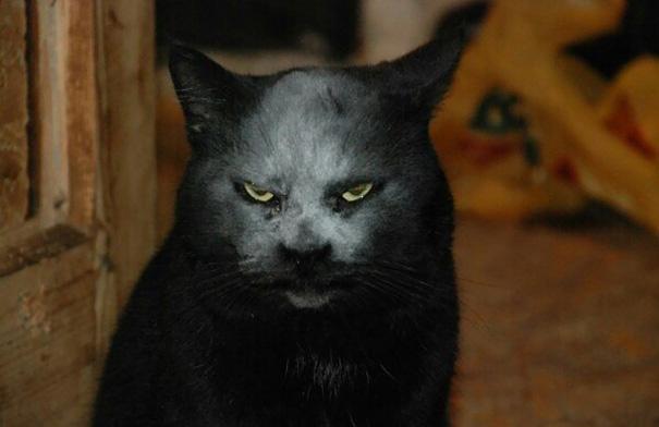accidente-harina-gato-demonio (3)