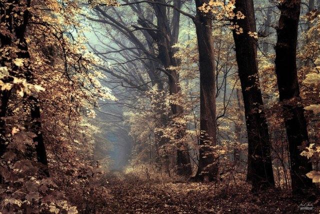 fotografia-bosques-otono-janek-sedlar (15)