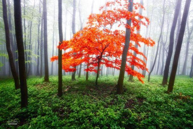 fotografia-bosques-otono-janek-sedlar (4)