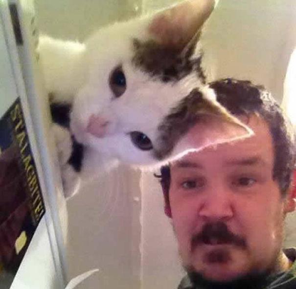 fotos-gatos-momento-justo (10)