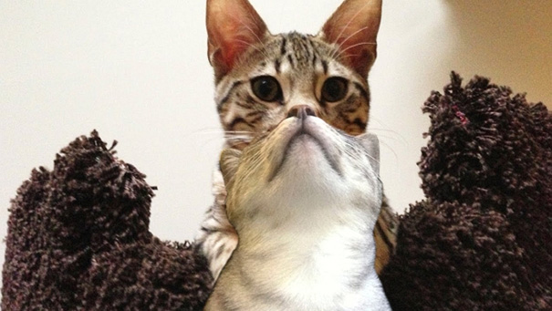 fotos-gatos-momento-justo (16)
