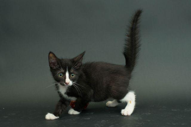 fotos-gatos-negros-adopcion (11)