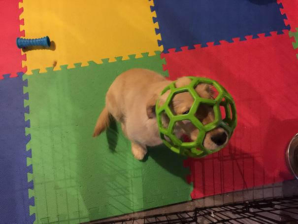 perros-cometiendo-errores (10)