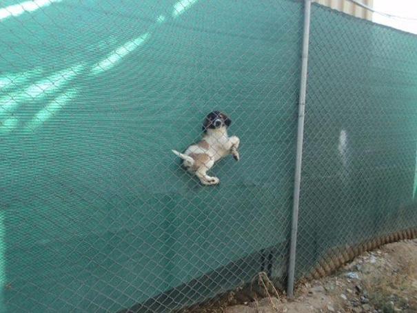 perros-cometiendo-errores (14)