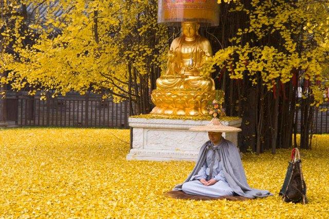 arbol-ginkgo-hojas-caidas-templo-budista-china (4)