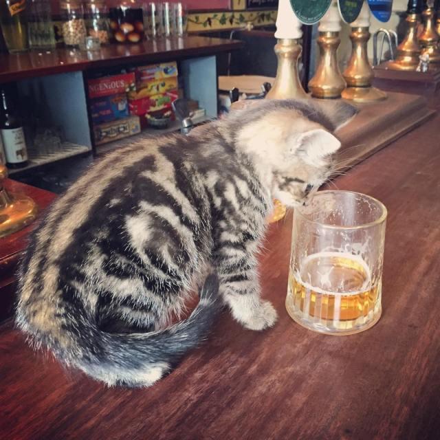 bar-gatos-pub-bag-of-nails-bristol (1)
