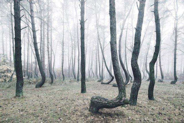 bosque-torcido-krzywy-las-kilian-schonberger-poland-polonia (5)