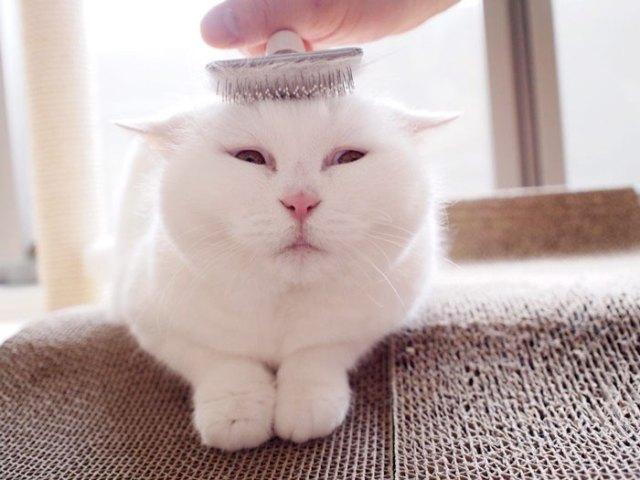 gato-anciano-disfrazado-ura-japon (2)