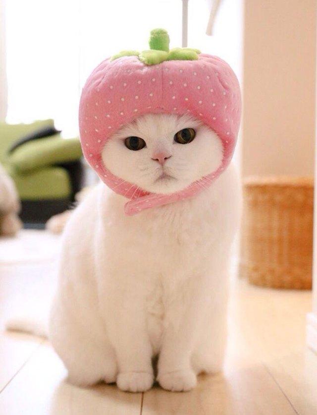 gato-anciano-disfrazado-ura-japon (4)
