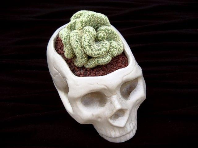 macetas-creativas-plantas (22)