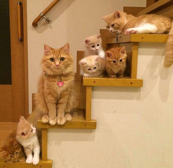orgullosas-mamas-gato (17)