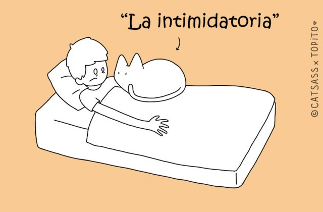 posturas-dormir-gato-catsass-9