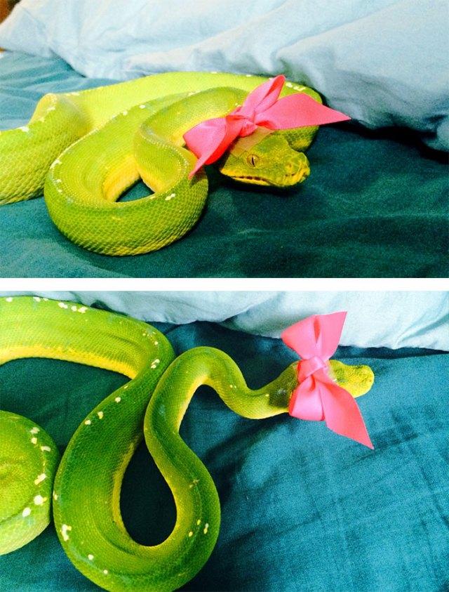 serpientes-llevando-sombrero (13)