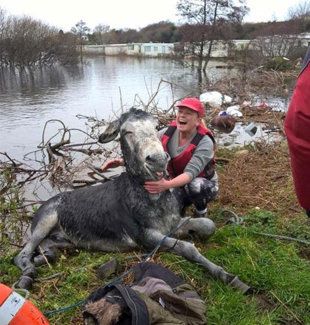burro-rescatado-riada-sonrisa-irlanda (4)