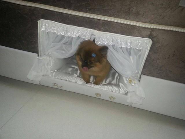 compartimento-mascotas-cama-colchao-inteligente-postural (4)