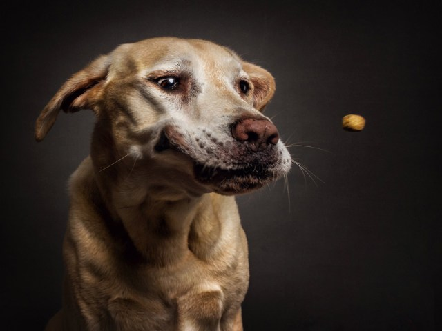fotos-perros-expresiones-faciales-comida-christian-vieler (4)