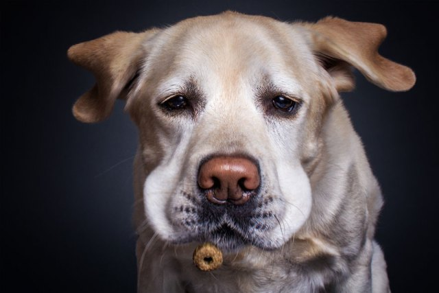 fotos-perros-expresiones-faciales-comida-christian-vieler (8)