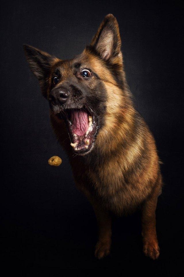fotos-perros-expresiones-faciales-comida-christian-vieler (9)