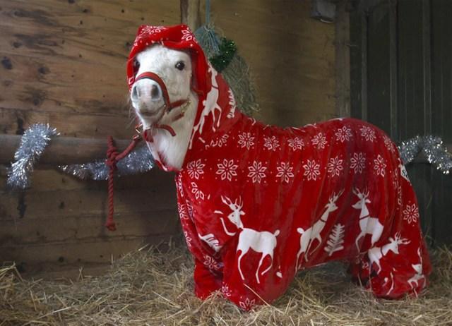 foursie-mono-festivo-pony-daffy (1)