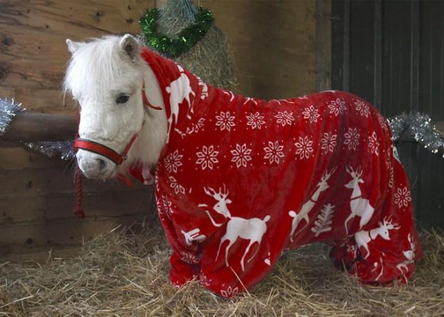 foursie-mono-festivo-pony-daffy (2)
