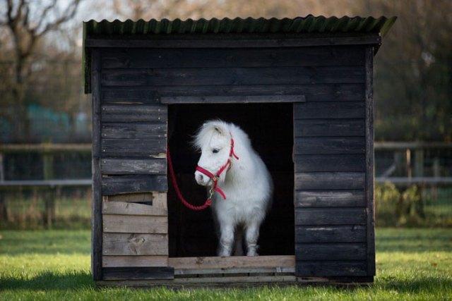 foursie-mono-festivo-pony-daffy (4)