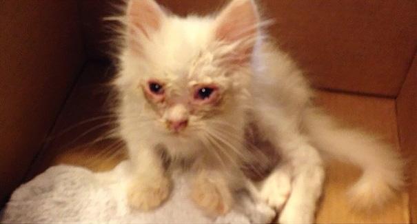 gatito-suave-encontrado-lado-de-una-carretera (10)
