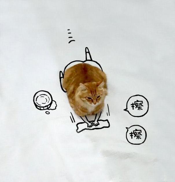 meme-foto-gato-dibujos-divertidos (12)