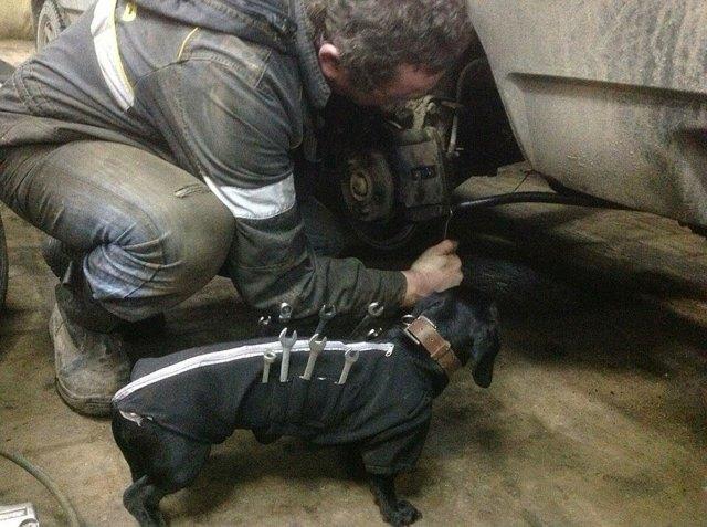 perro-salchicha-traje-mecanico-herramientas (2)