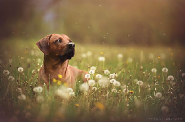 retratos-perros-naturaleza-anne-geier (13)