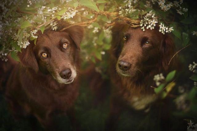 retratos-perros-naturaleza-anne-geier (14)