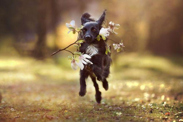 retratos-perros-naturaleza-anne-geier (4)