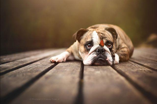 retratos-perros-naturaleza-anne-geier (6)