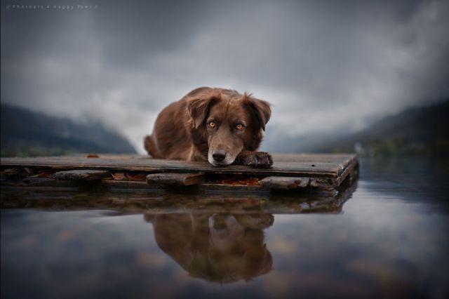 retratos-perros-naturaleza-anne-geier (7)
