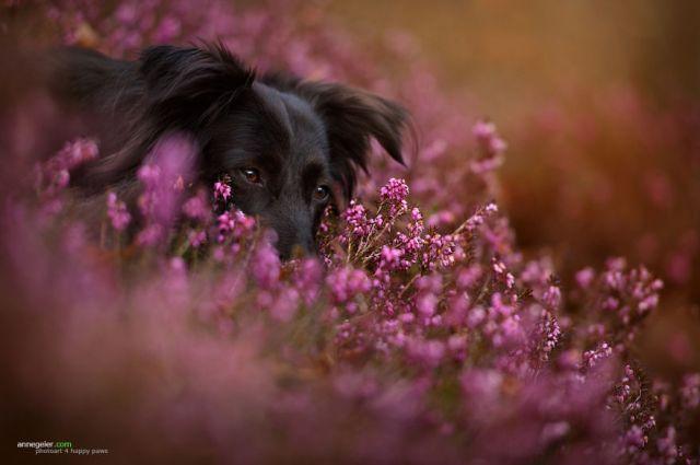retratos-perros-naturaleza-anne-geier (9)