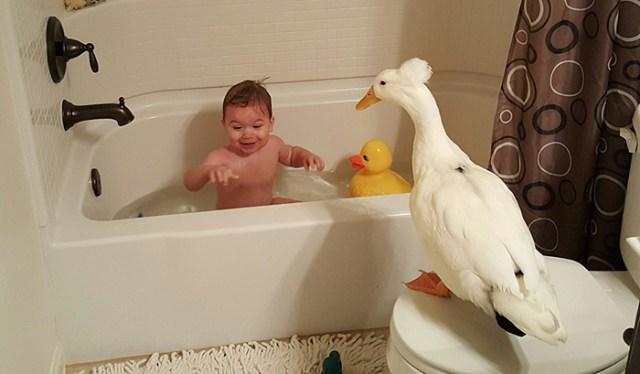 amistad-mascota-pato-beaker-nino-tyler-young (4)