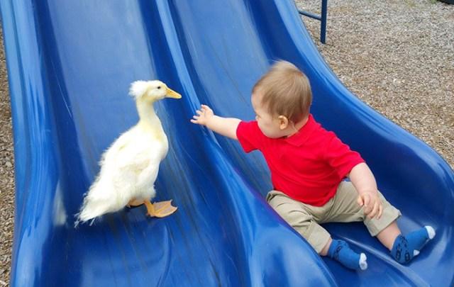 amistad-mascota-pato-beaker-nino-tyler-young (8)