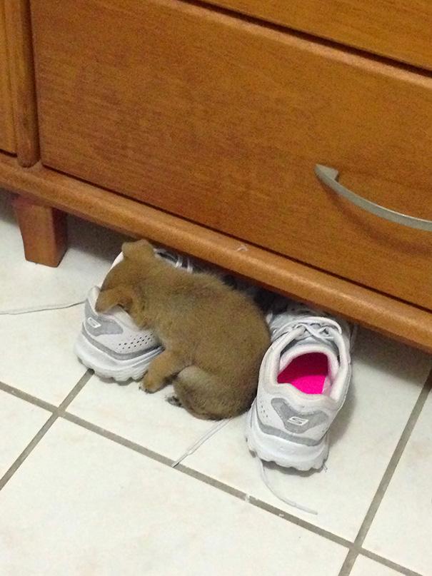 animales-durmiendo-cualquier-sitio (5)
