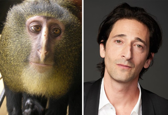 animales-parecidos-celebridades (1)