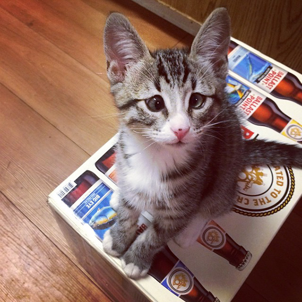 bum-gato-ojos-preocupados (5)