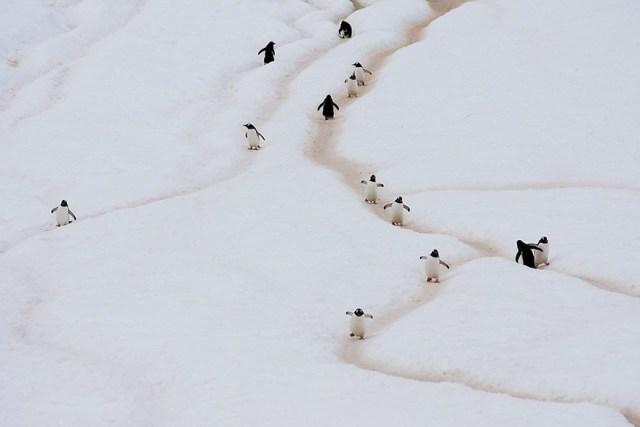 dia-concienciacion-pinguinos (1)