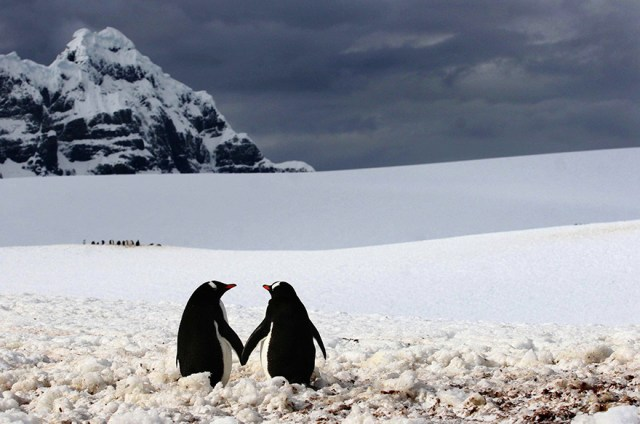 dia-concienciacion-pinguinos (20)
