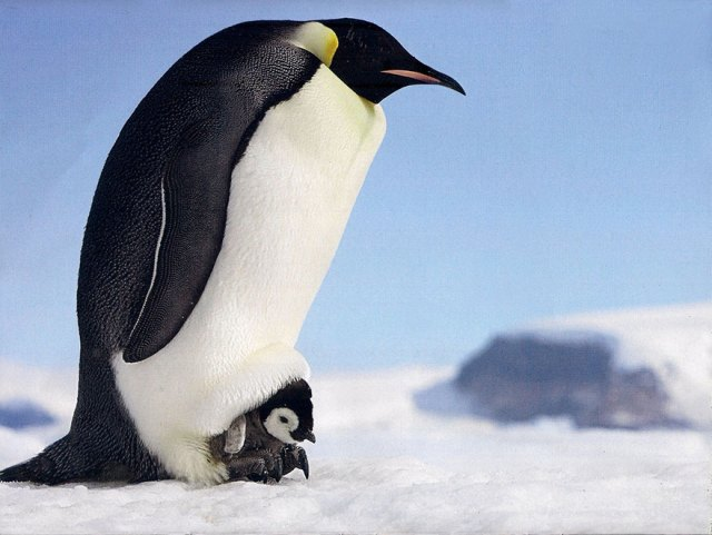 dia-concienciacion-pinguinos (34)