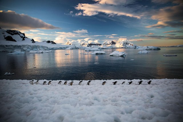 dia-concienciacion-pinguinos (5)