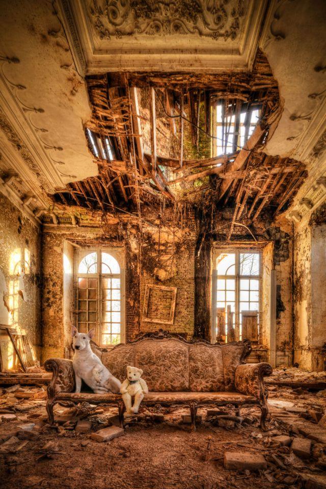 exploracion-lugares-abandonados-perro-claire-alice-van-kempen (1)